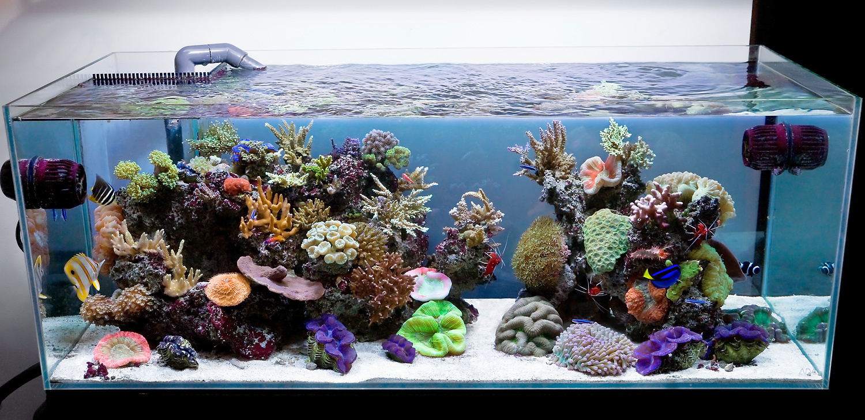 Открытые аквариумы своими руками